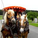 Auf diesem Foto sehen Sie eine zehnköpfige Reisegruppe in einer Pferdekutsche auf dem Weg ins Naturschutzgebiet Mohrhof.